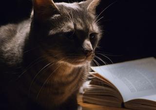 Espacio gato.