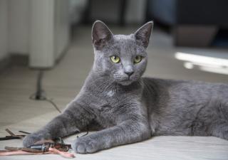 gato con un juguete en el suelo