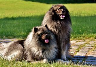 Cambios de pelo segun estaciones perro