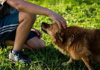 Cómo acercarse a un perro desconocido