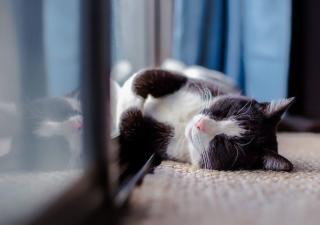 Gato desganado por la artritis