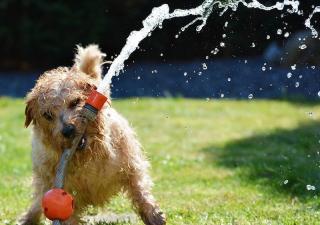 Cuidados de un perro en verano manguera