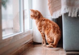 dejar a un gato solo en casa
