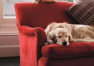 perro y gato descansando.- Zylkène