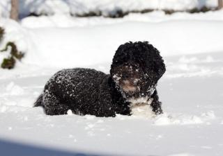 Entretener una mascota con nieve