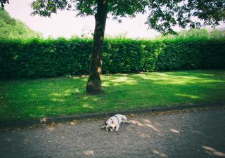 Mejorar la salud articular de tu perro