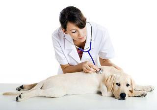 ¿Con qué frecuencia hay que llevar al veterinario a tus mascotas?