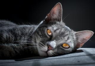 Problemas renales en gatos