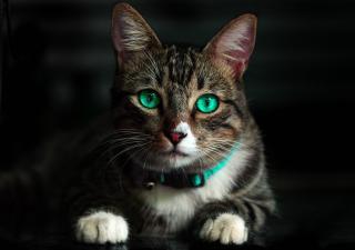 Salud emocional gatos