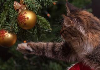 gato jugando con las bolas de Navidad