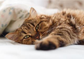 Gatos mayores con enfermedades