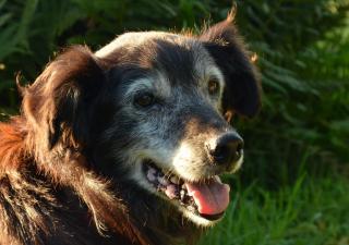 El alzheimer en perros