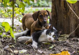 vacunas perros y gatos