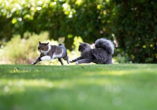 Dos gatos jugando en el jardin