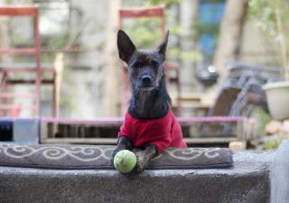 Fisioterapia para perros