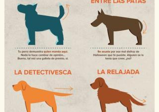 ¿Qué quiere decir tu perro cuando mueve la cola?