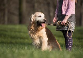 pasear a un perro con artrosis
