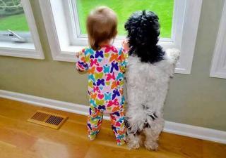 Perros niños