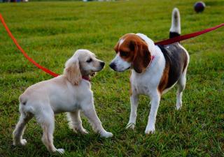 5 consejos para acoger a otro perro durante unos días