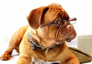 problemas-oculares-de-perros