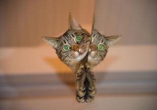 Cómo interpretar las señales de los gatos