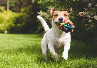 Consejos para disfrutar de tu perro en verano
