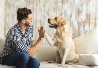 Cómo enseñar a mi perro a obedecer