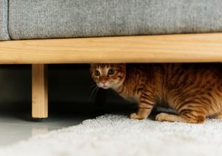 las mudanzas y los gatos