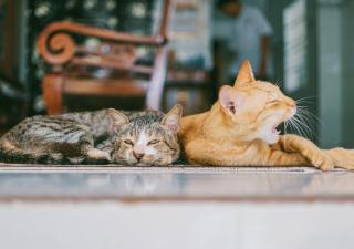sudor gatos