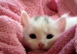 Enfermedades-gatos