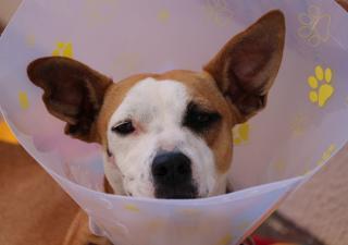 perro-enfermedad