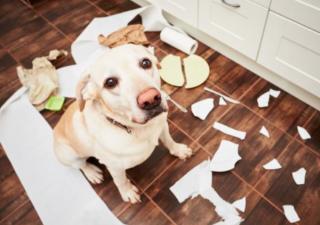 perro-comportamiento