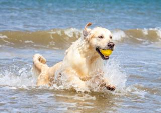 nadar con el perro