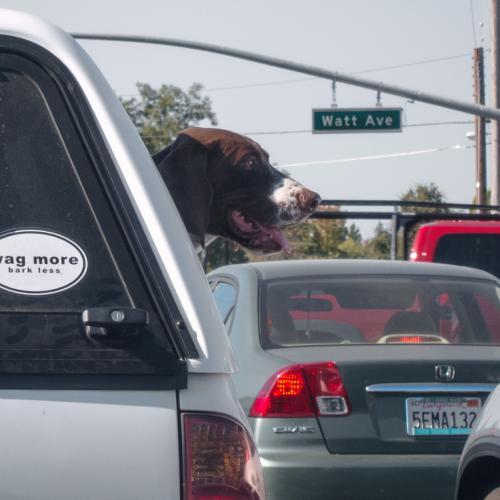 accidentes-de-perros