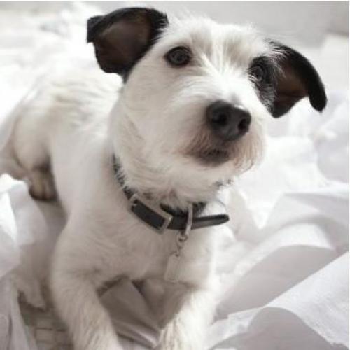 Enseña a tu perro a hacer sus necesidades