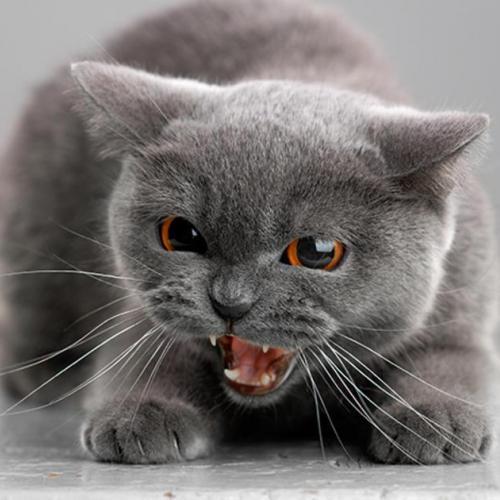 Gato con ansiedad y asustado