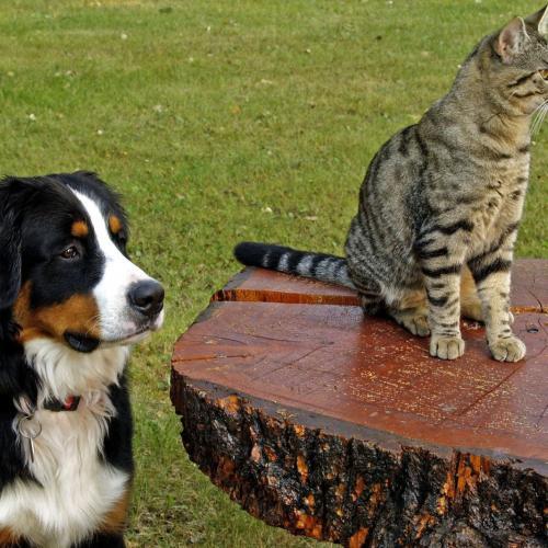 Consejos para disfrutar y evitar riesgos con tu mascota en verano