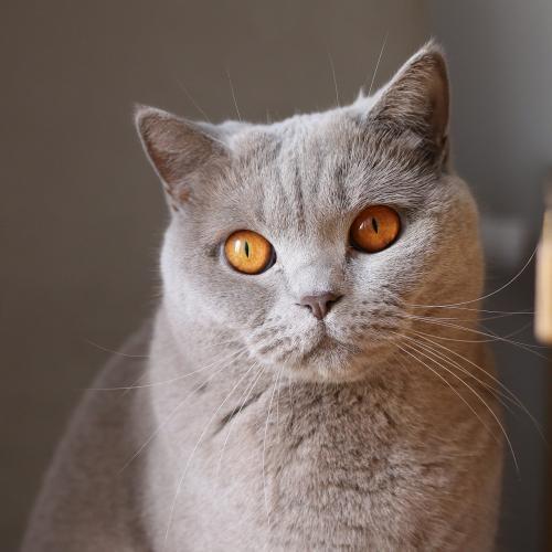 La expresión facial de los gatos (Fuente: Pixabay)