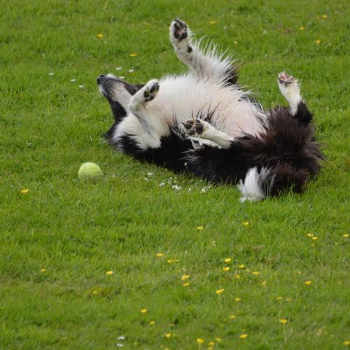 Perro feliz jugando en el césped