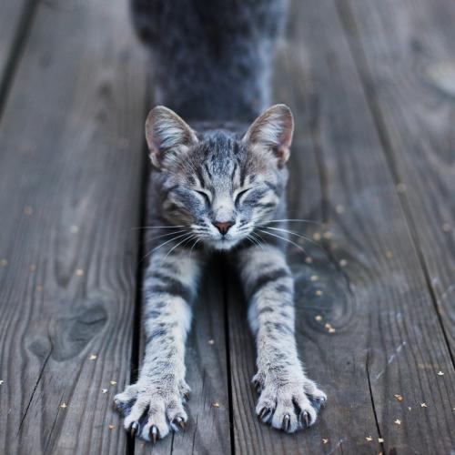 fisioterapia para gatos