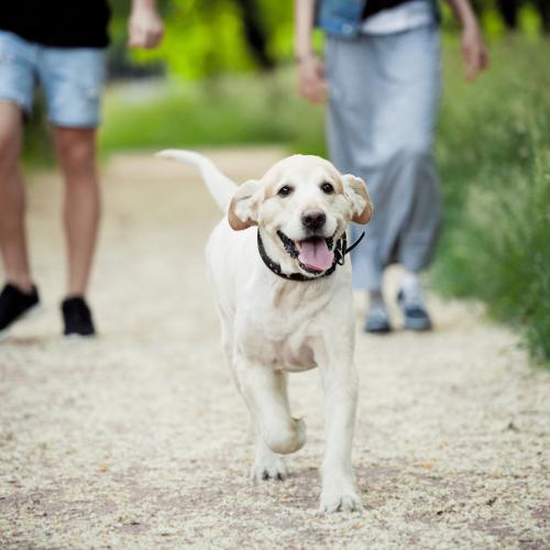 riesgos de llevar a tu perro suelto